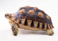 龟类图片(25张)