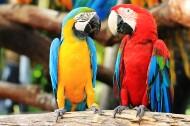 可爱的鹦鹉图片(6张)