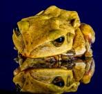 不同种类的青蛙图片(15张)