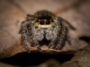形态各异的蜘蛛图片(12张)
