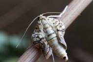 蝴蝶破蛹过程图片(9张)