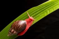 红蜗牛图片(4张)