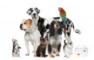 可爱的宠物图片(10张)