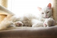 睡觉的猫咪图片(11张)