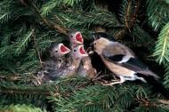 鸟儿妈妈喂食图片(3张)