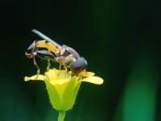 微距昆虫图片(34张)