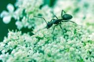 蚂蚁高清图片(12张)