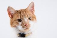 猫咪图片 (10张)