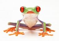 青蛙图片(70张)