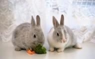可爱小兔子图片(28张)
