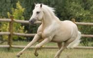 白色骏马图片(13张)