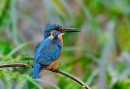 捕鱼的翠鸟图片(8张)