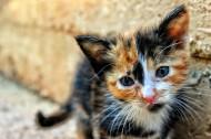 顽强生存的流浪猫图片(12张)