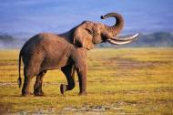 大象侧面特写图片(14张)