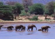 野生大象图片(22张)