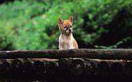 可爱小狗图片(22张)