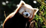 可爱小浣熊图片(6张)