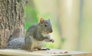 活泼的小松鼠图片(15张)