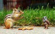 可爱的松鼠图片(11张)