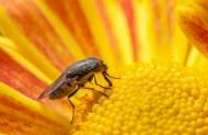 果蝇昆虫微距图片(8张)