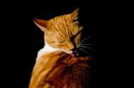 正在睡觉的猫图片(13张)