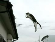 街角流浪猫图片(50张)