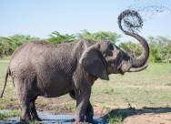 大象高清图片(11张)