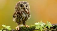 可爱的小猫头鹰图片(10张)