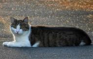 趴着的猫咪图片(10张)