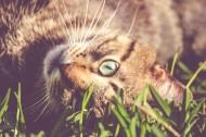 姿态妖娆的猫咪图片(10张)
