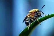 微距蜜蜂图片(9张)