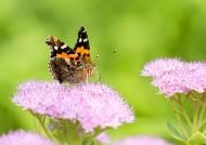 蝴蝶图片(5张)