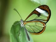 美丽的蝴蝶图片(45张)