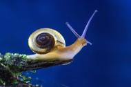 蜗牛图片(11张)