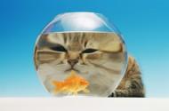 滑稽小猫图片(24张)