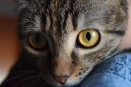 睁大双眼的小猫图片(14张)
