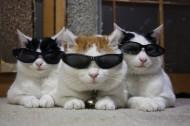 超级憨态可爱的猫叔图片 第二辑(78张)