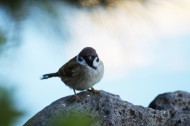 一只娇小的麻雀图片(11张)