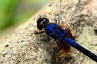 微距蜻蜓图片(5张)