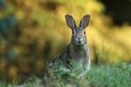 可爱的野兔图片(11张)