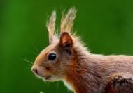 可爱的小松鼠图片(14张)
