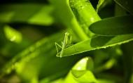神气的螳螂图片(21张)