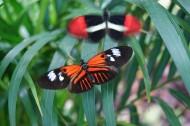 绚丽的蝴蝶图片(8张)