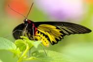 美丽的蝴蝶图片(15张)