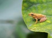 慵懒的树蛙图片(9张)