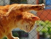 可爱的黄白橘猫图片(10张)