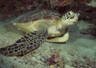 海龟图片(6张)