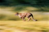 豹图片(40张)