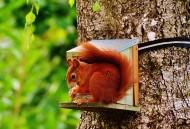 可爱的小松鼠高清图片(14张)