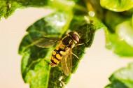 辛勤的蜜蜂图片(8张)